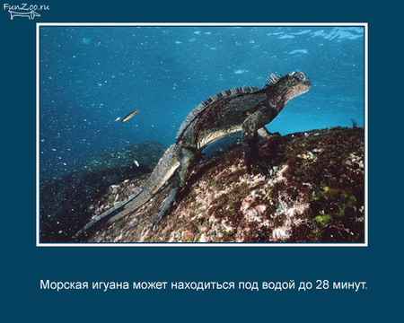 Животные иинтересные факты оних. Изображение № 21.