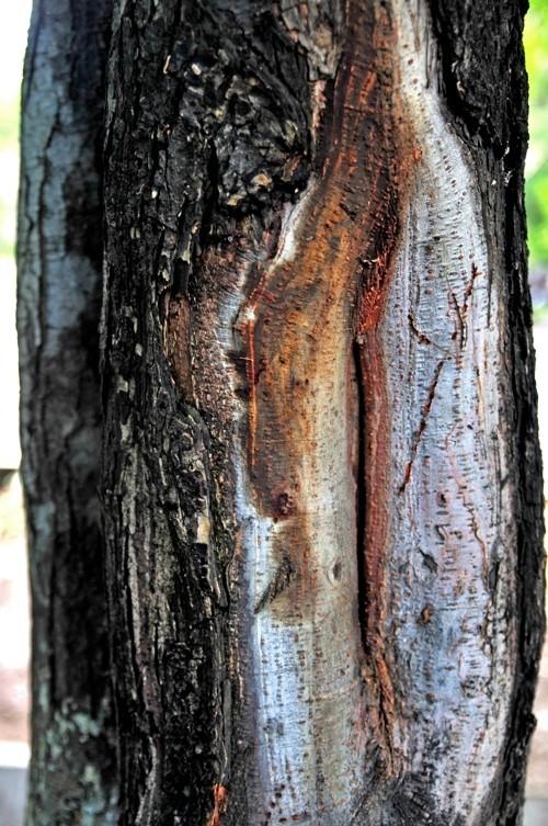 Treefilia. Изображение № 7.