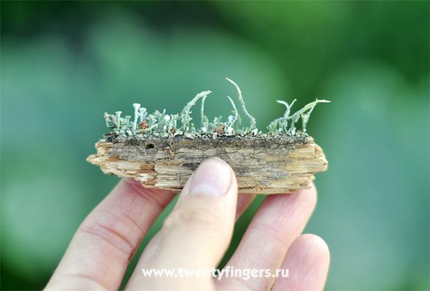 Вечнозеленый маленький мир.. Изображение № 6.