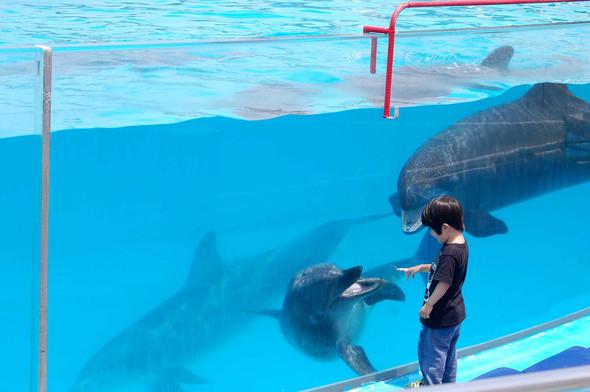 Изображение 2. Okinawa Churaumi Aquarium.. Изображение № 2.