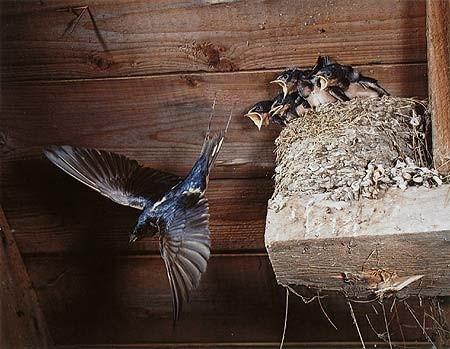 Элиот Портер: фотограф раскрасивший мир. Изображение № 12.