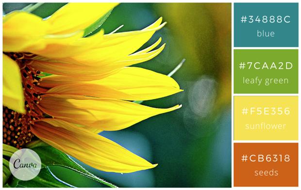 Сервис Canva предложил 100 удачных сочетаний цветов. Изображение № 23.