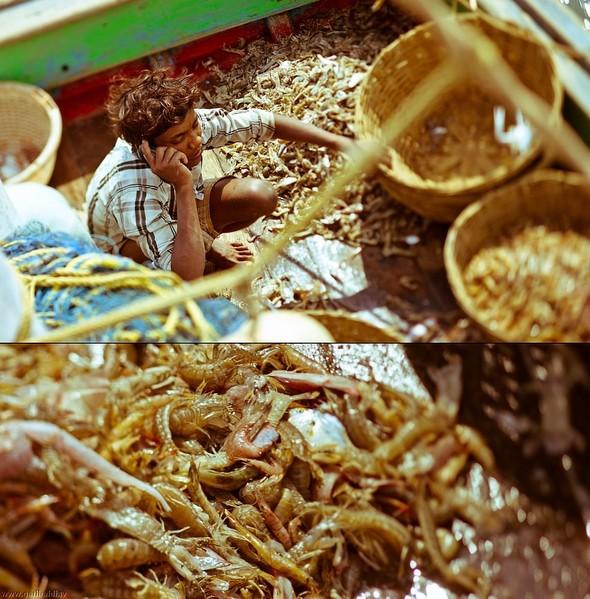 Shrimp boat MFR 646 DF GOA - Non stop. Изображение № 22.