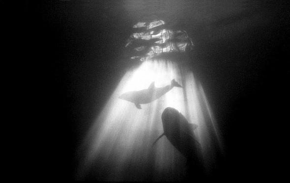 Подводная жизнь глазами фотографа Карлоса Франко. Изображение № 7.