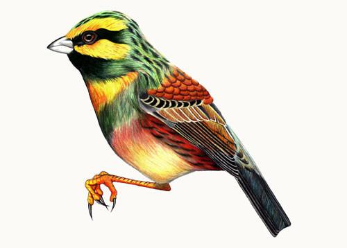 Birds Of Claire. Изображение № 1.