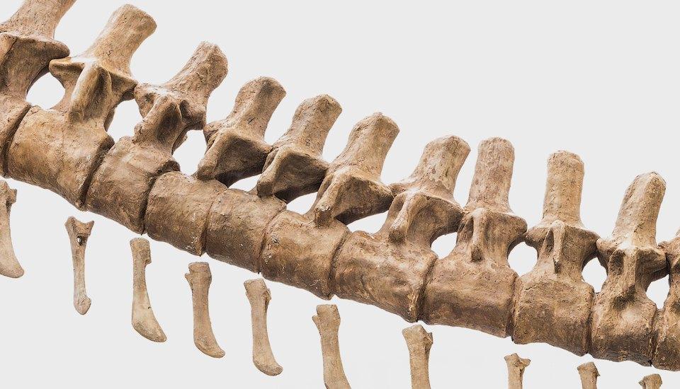Как динозавры иединороги станут домашними животными. Изображение №5.