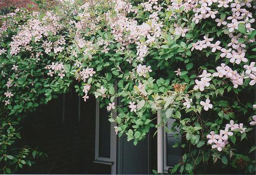 Изображение 15. Никогда не надо слушать, что говорят цветы. Надо просто смотреть на них и дышать их ароматом... Изображение № 15.
