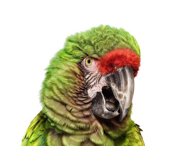 Божественные птицы Andrew Zuckerman. Изображение № 3.