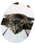 Некролог: Кот умер! Даздравствует кот!. Изображение № 8.