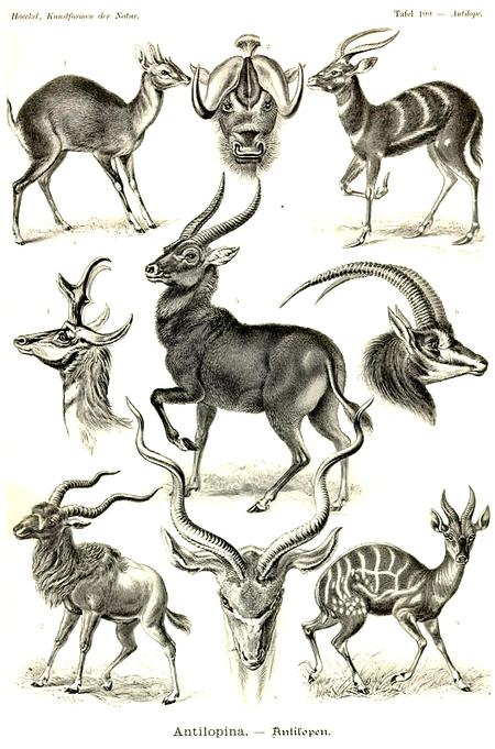 Причудливые формы природы. Изображение № 49.