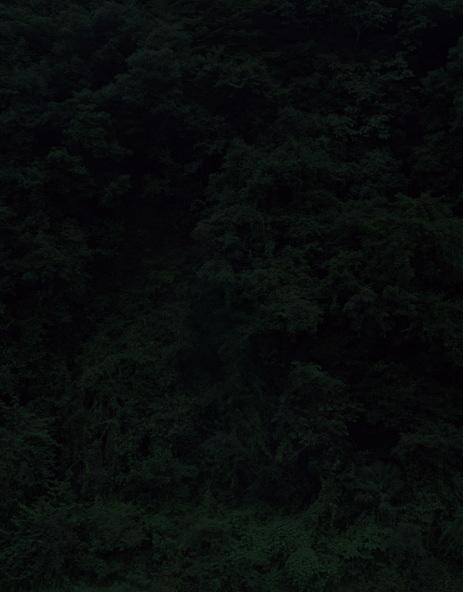Темный лесКейты Сигиуры. Изображение № 3.