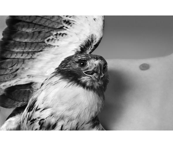 Изображение 29. Новая выставка Райана Макгинли.. Изображение № 28.