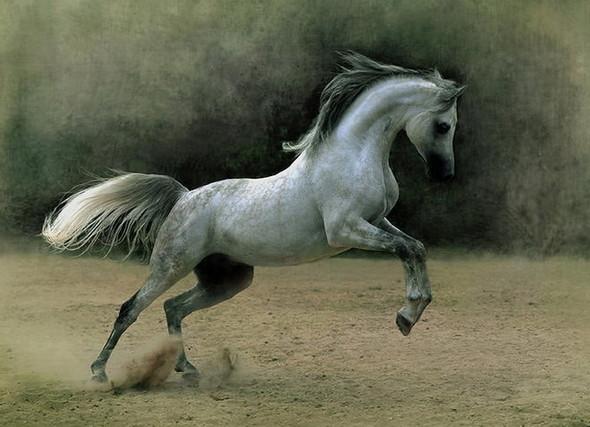 Фотографии лошадей Wojtek Kwiatkowski. Изображение № 3.