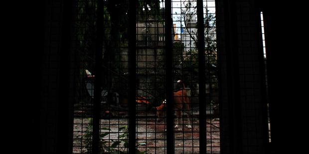 Калькутта (Индия). Изображение № 10.