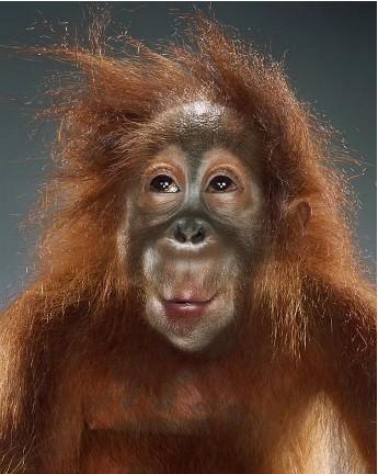 """Jill Greenberg """"Monkey portraits"""". Изображение № 8."""