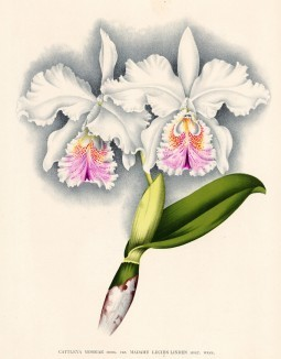Глянцевые орхидеи: слухи, сплетни, комментарии. Изображение № 2.