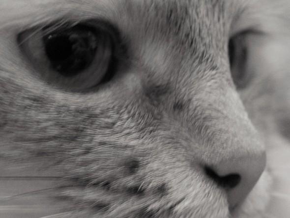 Алина любит фотографировать. Изображение № 62.