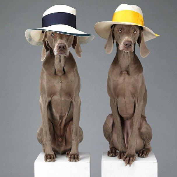 Acne одели собак в свою коллекцию. Изображение № 5.