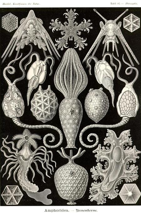 Причудливые формы природы. Изображение № 44.