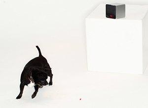 Как владелец шумной собаки придумал робота Petcube для питомцев. Изображение №9.