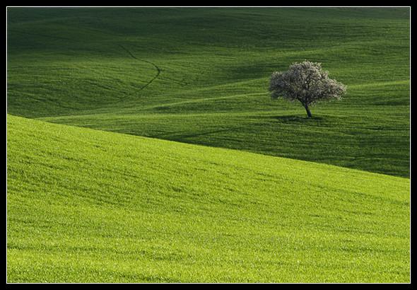 Очарованный солнцем Michele Berti. Изображение № 6.