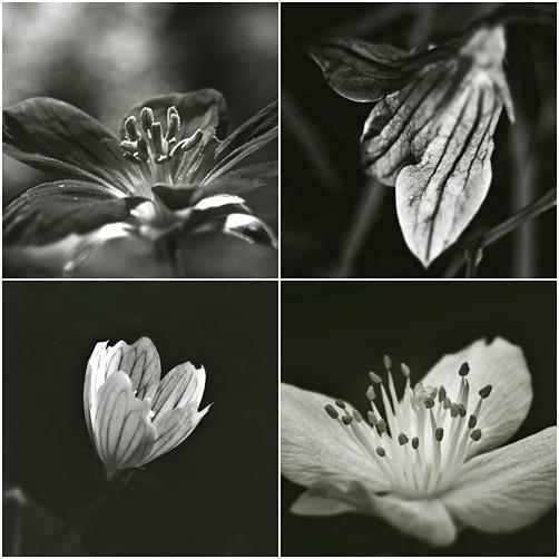 Весна в лесу. Изображение № 2.