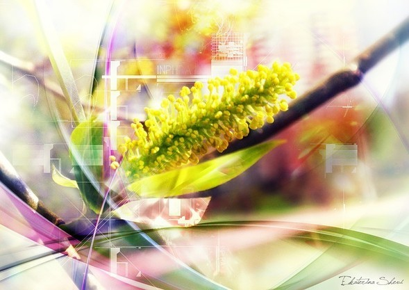 Время цветения. Изображение № 10.
