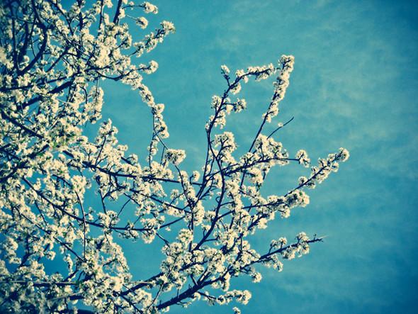 Весна идет! Создаем весеннее настроение. Изображение № 24.