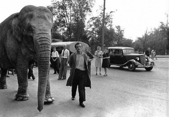 Слон на улице. Изображение № 94.