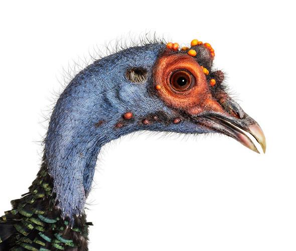 Божественные птицы Andrew Zuckerman. Изображение № 5.
