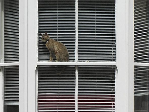 Cat. Window. Изображение № 35.