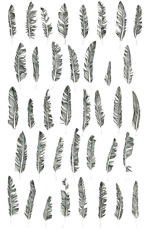 Birds Of Claire. Изображение № 11.