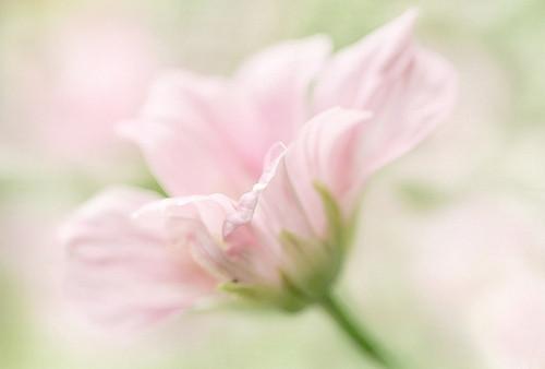 Изображение 20. Никогда не надо слушать, что говорят цветы. Надо просто смотреть на них и дышать их ароматом... Изображение № 20.