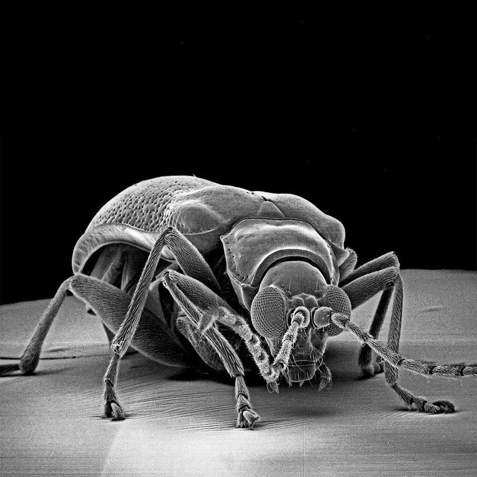 Как насекомые выглядят под микроскопом:  9 высокоточных изображений. Изображение № 6.