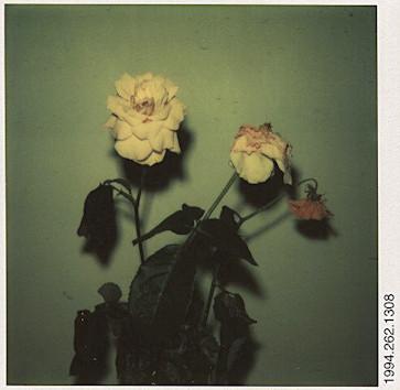 20 фотоальбомов со снимками «Полароид». Изображение №294.