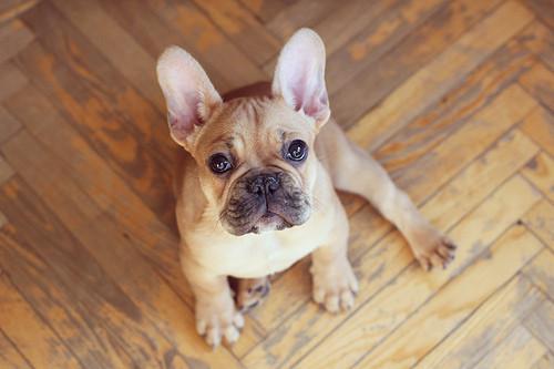 Puppy, puppy, 1-2-3!. Изображение № 9.