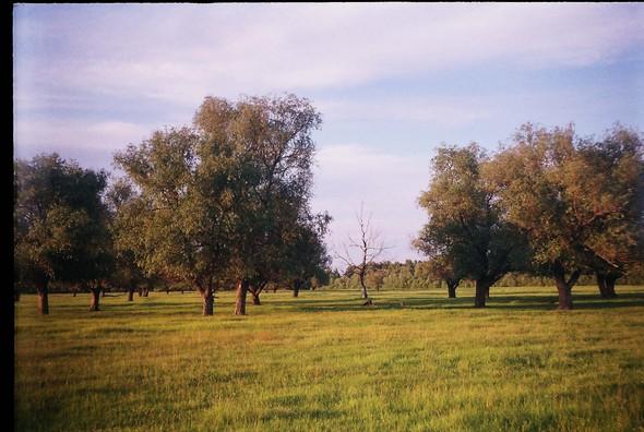 Деревня Окунёво. Изображение № 24.