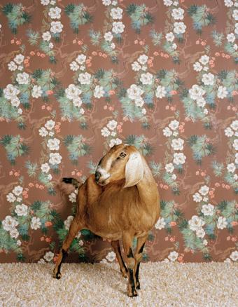 Животноводство отCatherine Ledner. Изображение № 32.