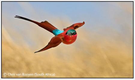 Победители Wildlife Photographer 2008. Изображение № 41.