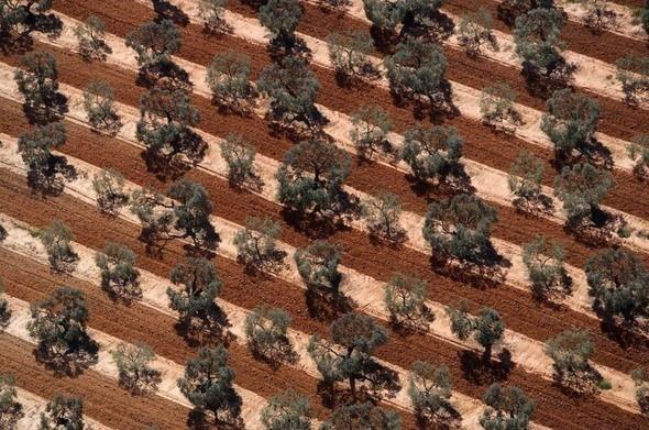 Оливковая плантация в Андалусии. Испания. Изображение № 29.