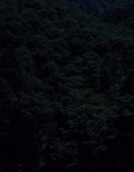 Темный лесКейты Сигиуры. Изображение № 9.