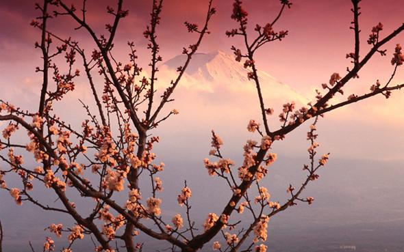 Весна идет! Создаем весеннее настроение. Изображение № 11.