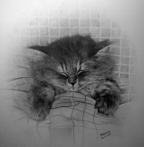 Кошки, люди, карандаш. Paul Lung. Изображение № 3.