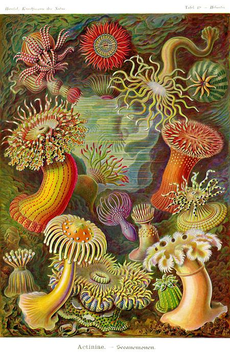 Причудливые формы природы. Изображение № 24.