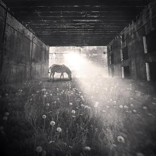 Фотограф Denis Olivier. Изображение № 4.