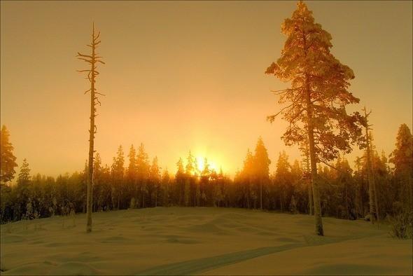 Изображение 14. Выходные в шведском лесу.. Изображение № 14.
