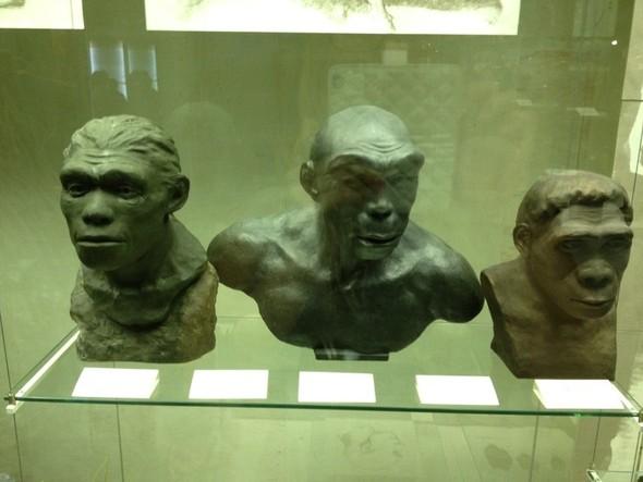 Дарвиновский музей. Изображение № 2.