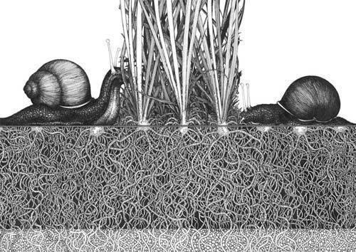 Изображение 9. Галерея или оранжерея?.. Изображение № 9.
