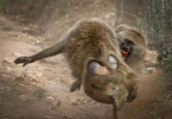 Фотоконкурс National Geographic 2010. Изображение № 14.