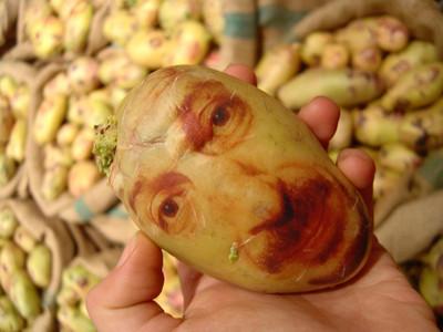 Картофельные портреты. Изображение № 5.